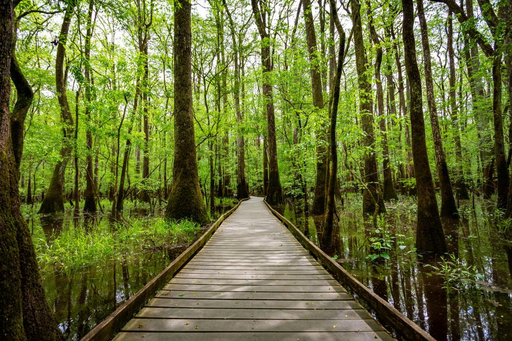 Congaree River Blue Trail